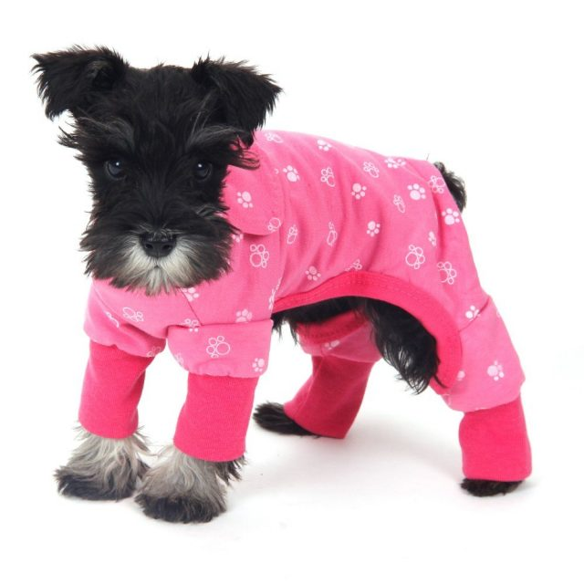 Lovely Comfortable Warm Cotton Jumpsuit for Small Dogs
