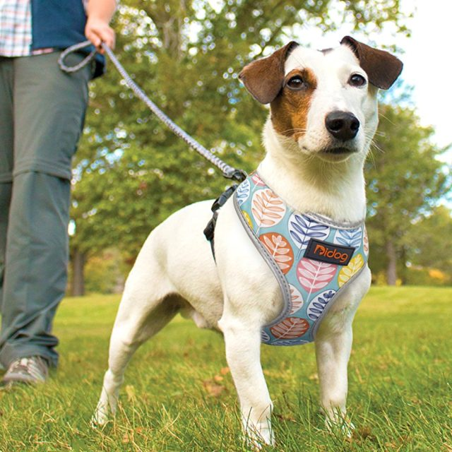 Nylon Dog Cat Harness Printed French Bulldog Harness Puppy Small Dogs Harnesses Vest for Chihuahua Yorkshire Walking Training