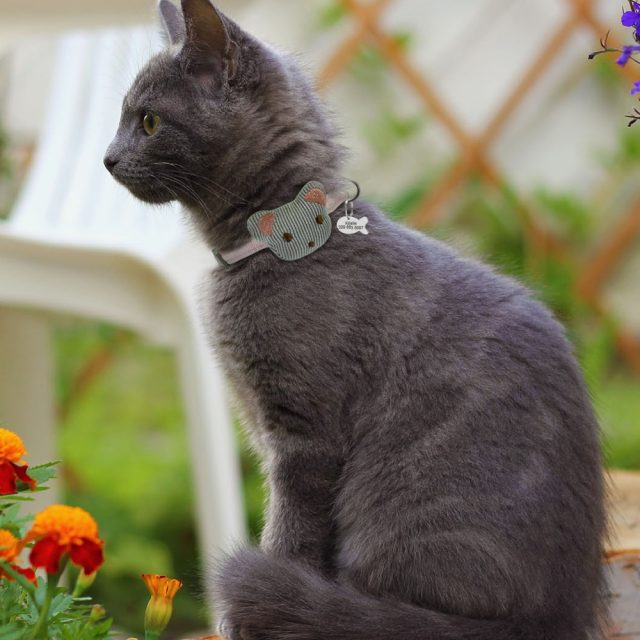 Personalized Cat Collar With Tag Custom Kitten Collars Necklace Free Engraving Fish ID Tag Nameplate Cat Pet Accessories